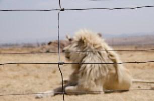 Rencontre en Afrique du Sud - Jaiuneouverture - Tour du Monde