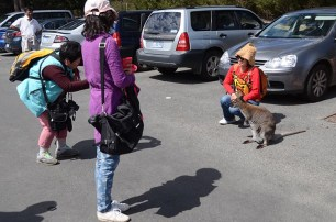 Une rando au Freycinet National Park - Tasmanie -J'ai une ouverture - Tour du Monde (23)
