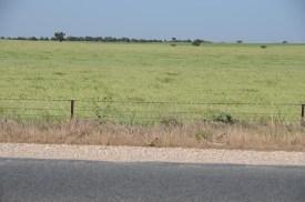 Vers le Coorong National Park - Australie (2)