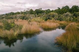 La jungle et les plages de la West Coast - Nouvelle Zélande - Jaiuneouverture Tour du Monde (11)
