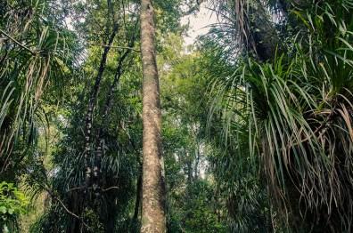 La jungle et les plages de la West Coast - Nouvelle Zélande - Jaiuneouverture Tour du Monde (13)