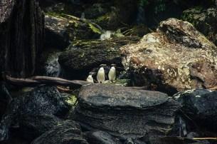 Milford Sound - Nouvelle Zélande - Jaiuneouverture Tour du Monde (1)