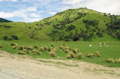 Moke Lake - Nouvelle Zélande - Jaiuneouverture Tour du Monde (1)