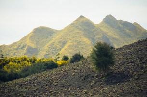On a vu des otaries à Kaikoura - Nouvelle Zélande - Jaiuneouverture Tour du Monde (2)