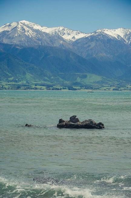 On a vu des otaries à Kaikoura - Nouvelle Zélande - Jaiuneouverture Tour du Monde (7) copy