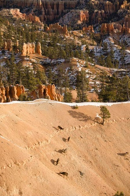Le Bryce Canyon - Utah - USA (8) copy