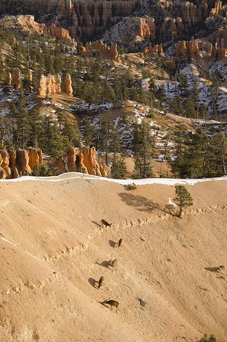 Le Bryce Canyon - Utah - USA (8) copy