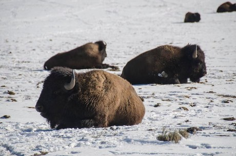 Zion National Park - Utah - USA (13)