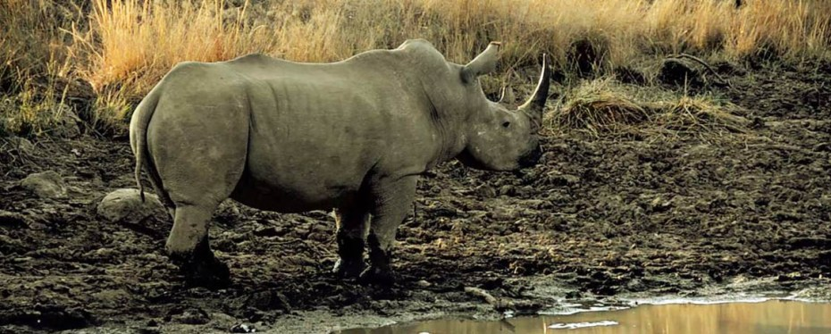 Rhino - Jaiuneouverture
