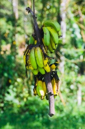Un oiseau couleur banane