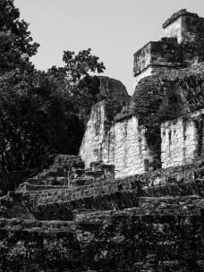 Tikal au Guatemala (1) copy