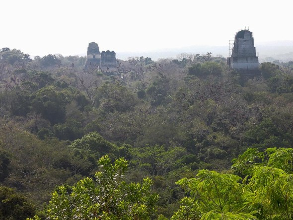 Tikal au Guatemala (11)