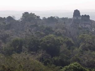 Tikal au Guatemala (12)