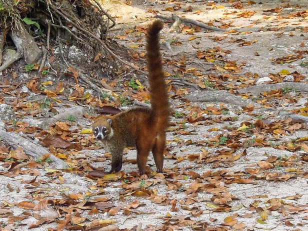 Tikal au Guatemala (4)