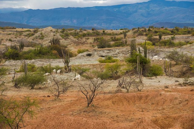 Desierto de la Tatacoa - Colombie (22)
