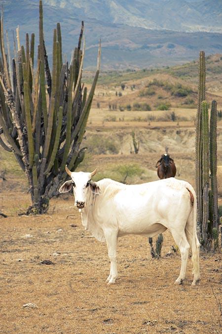 Desierto de la Tatacoa - Colombie (5) copy