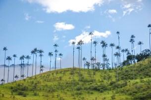 Salento - Colombie (2)