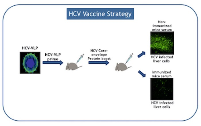 news_april2016_HCV-Vaccine_image