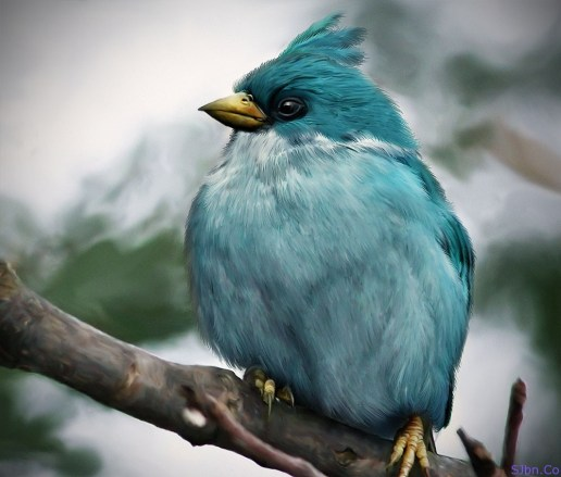 Natural And Real Blue Angry Bird - Glassbreaker