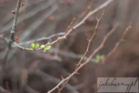 zielone listki wiosna