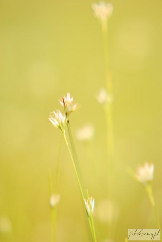 10-obary-roslinka-kwiatki