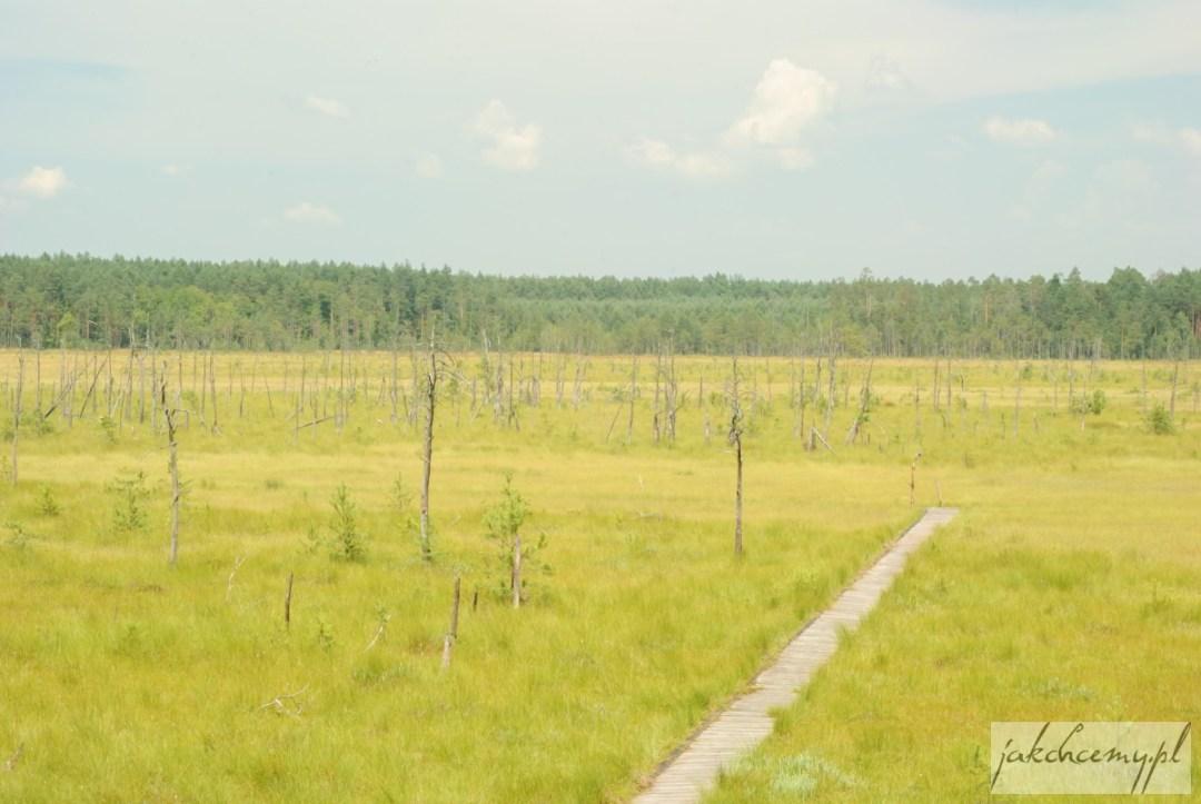 Rezerwat Obary torfowisko z góry
