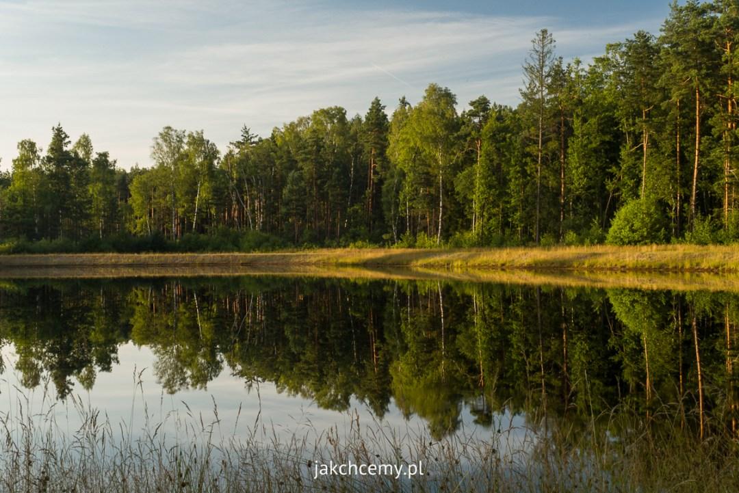 piknik Rapy Dylańskie las staw