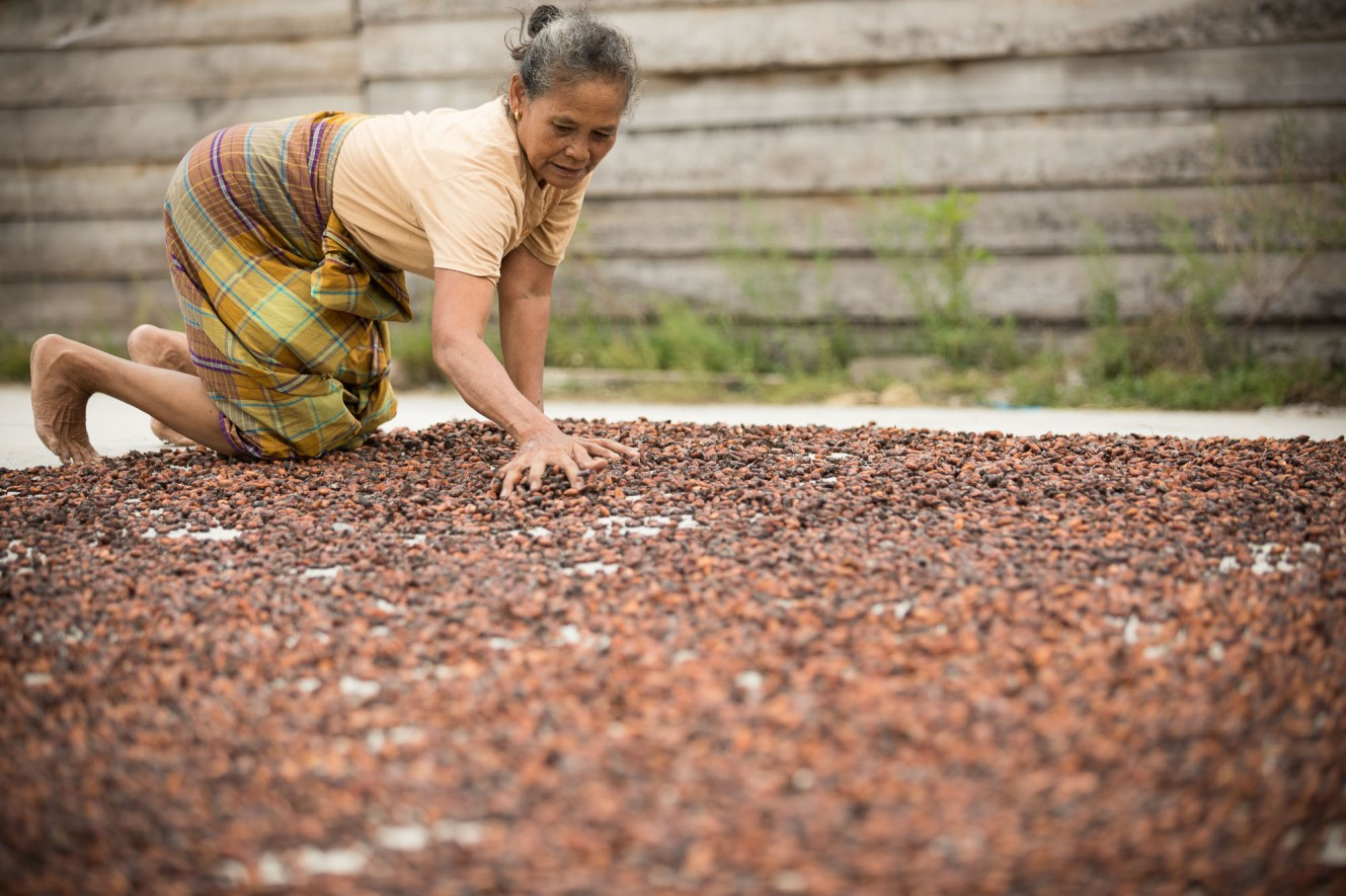 A small farmer dries her cocoa crop outside Mamuju, Indonesia.