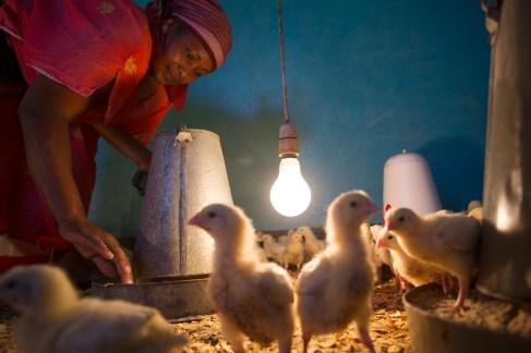 Chicken farm in Arusha, Tanzania, East Africa.