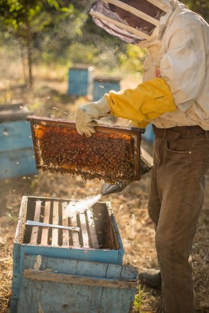 Honey is harvested from beehives and frames in Leon Department, Nicaragua.