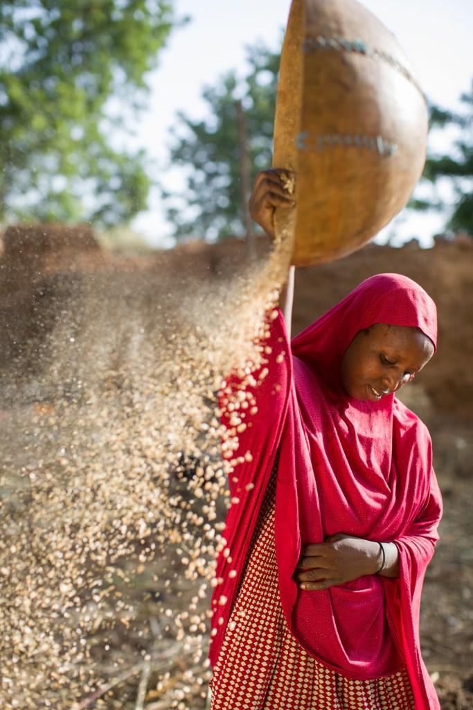 A woman winnows her cowpea harvest in Tahoua Region, Niger.