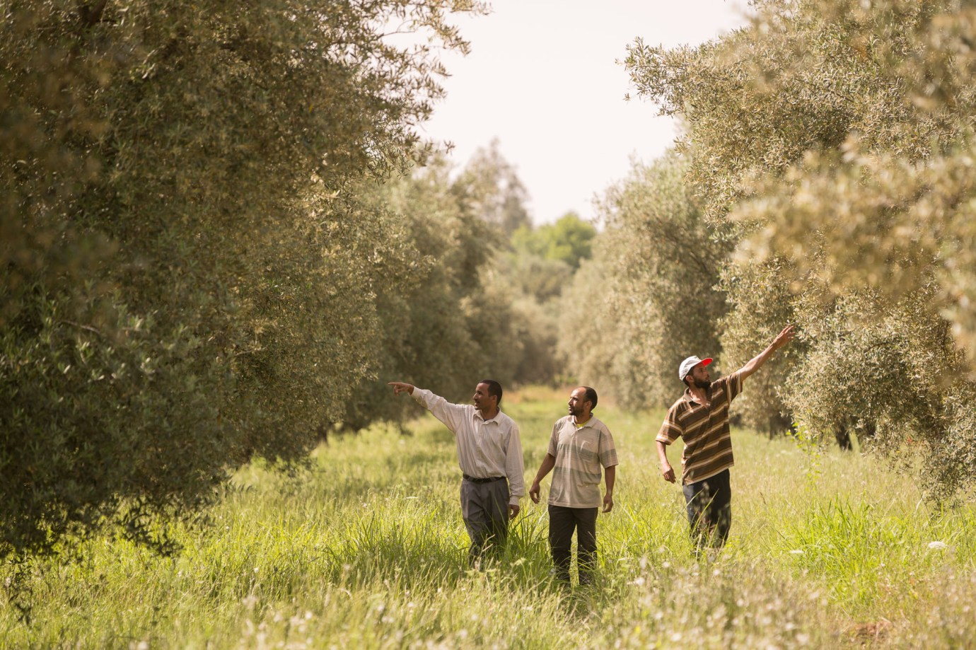 Farmers inspect an olive grove in Ourika, Morocco.