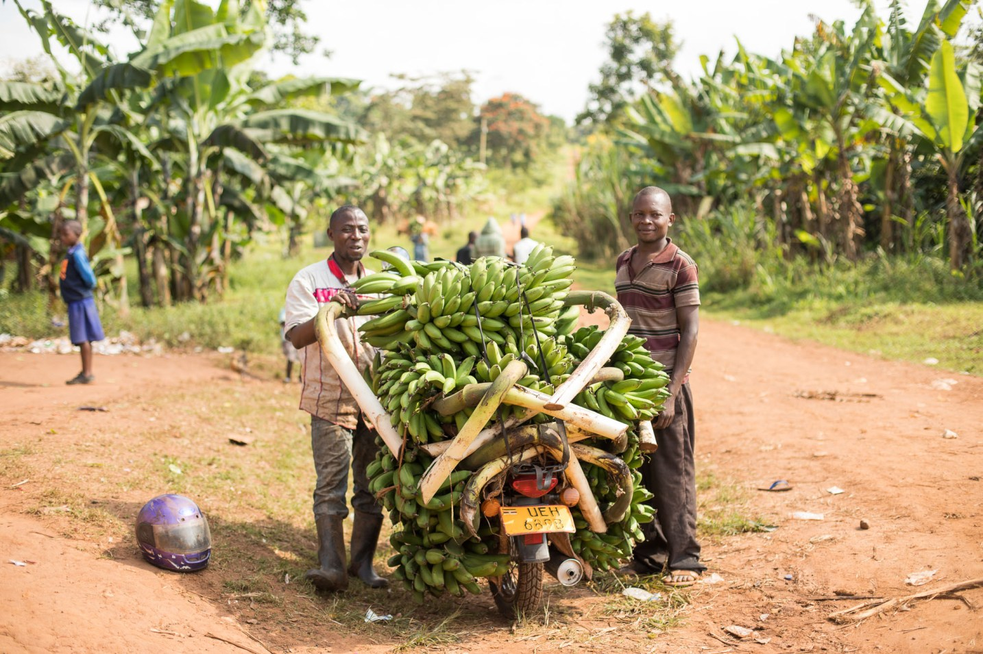 The East African highland banana is a starchy staple food in Mukono District, Uganda.