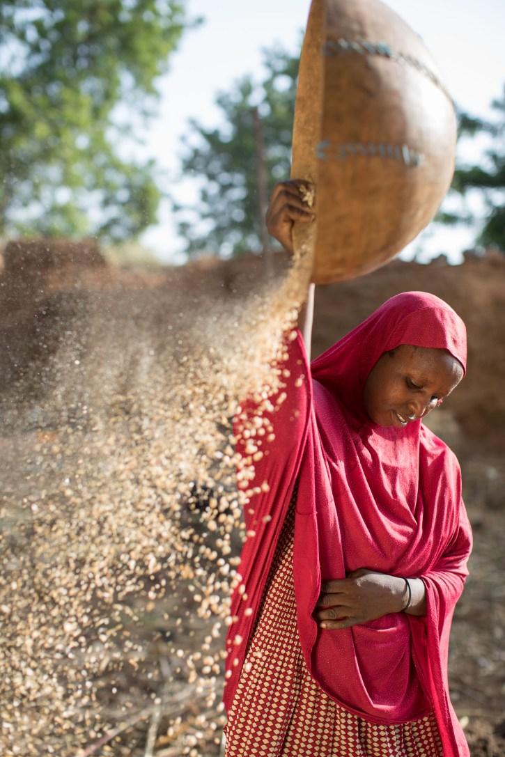 Chaudi Zakari (37) winnows her cowpea harvest on her family's farm in Tahoua Region, Niger.