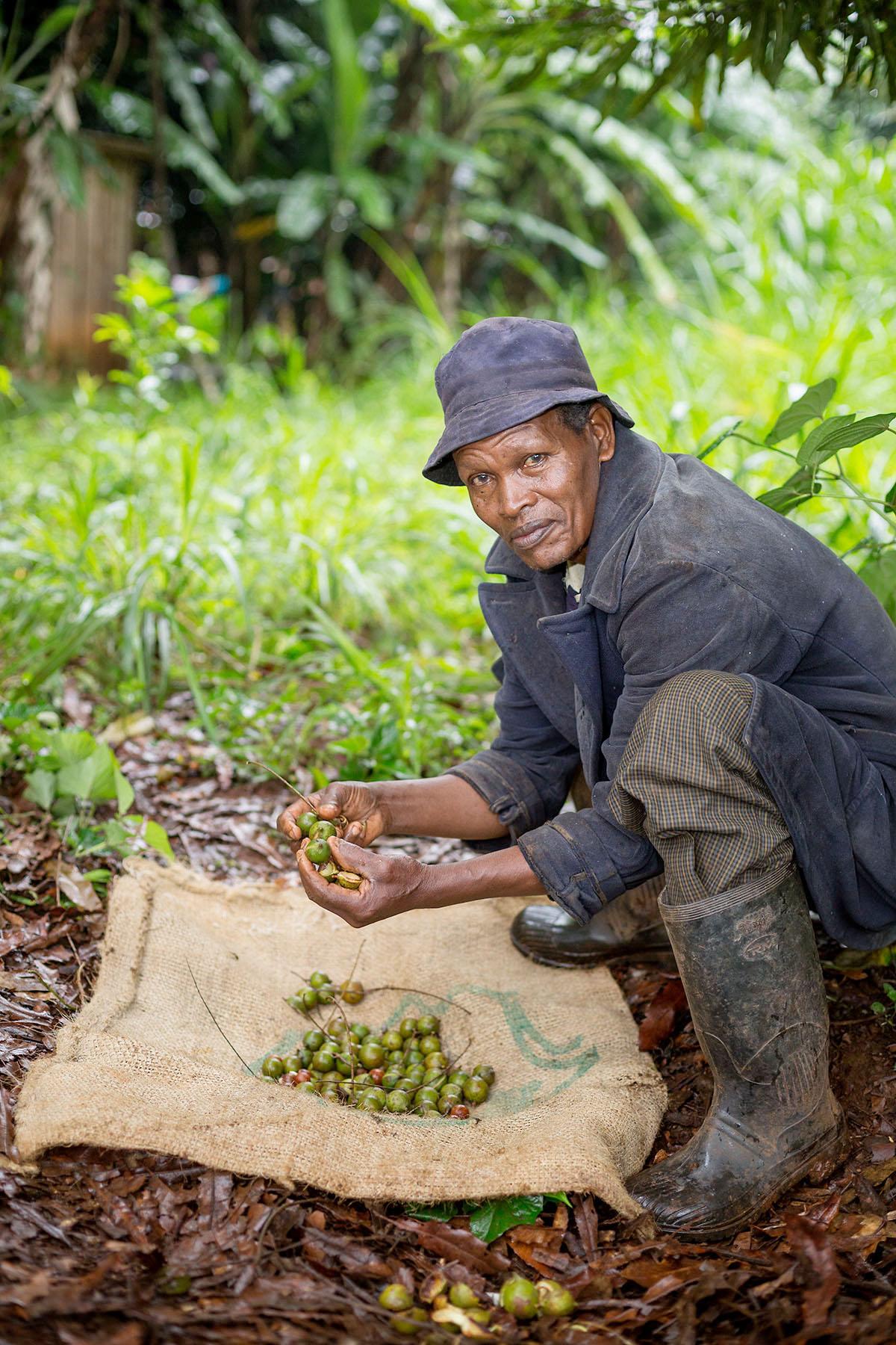 A nut grower forages for macadamia nuts in Kirinyaga County, Kenya.