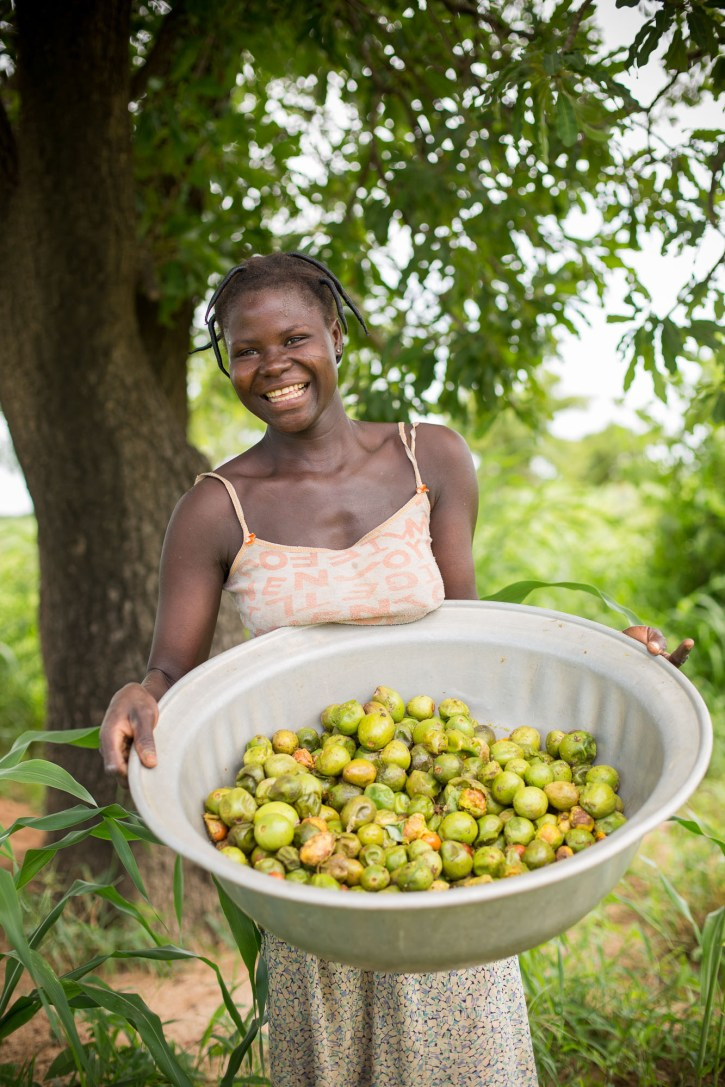 Tiono Rosalie (21) forages for shea nuts beneath a shea tree in rural Réo Department, Burkina Faso.
