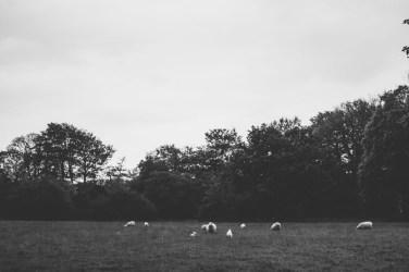 Fairyhill Wedding Photography_-118