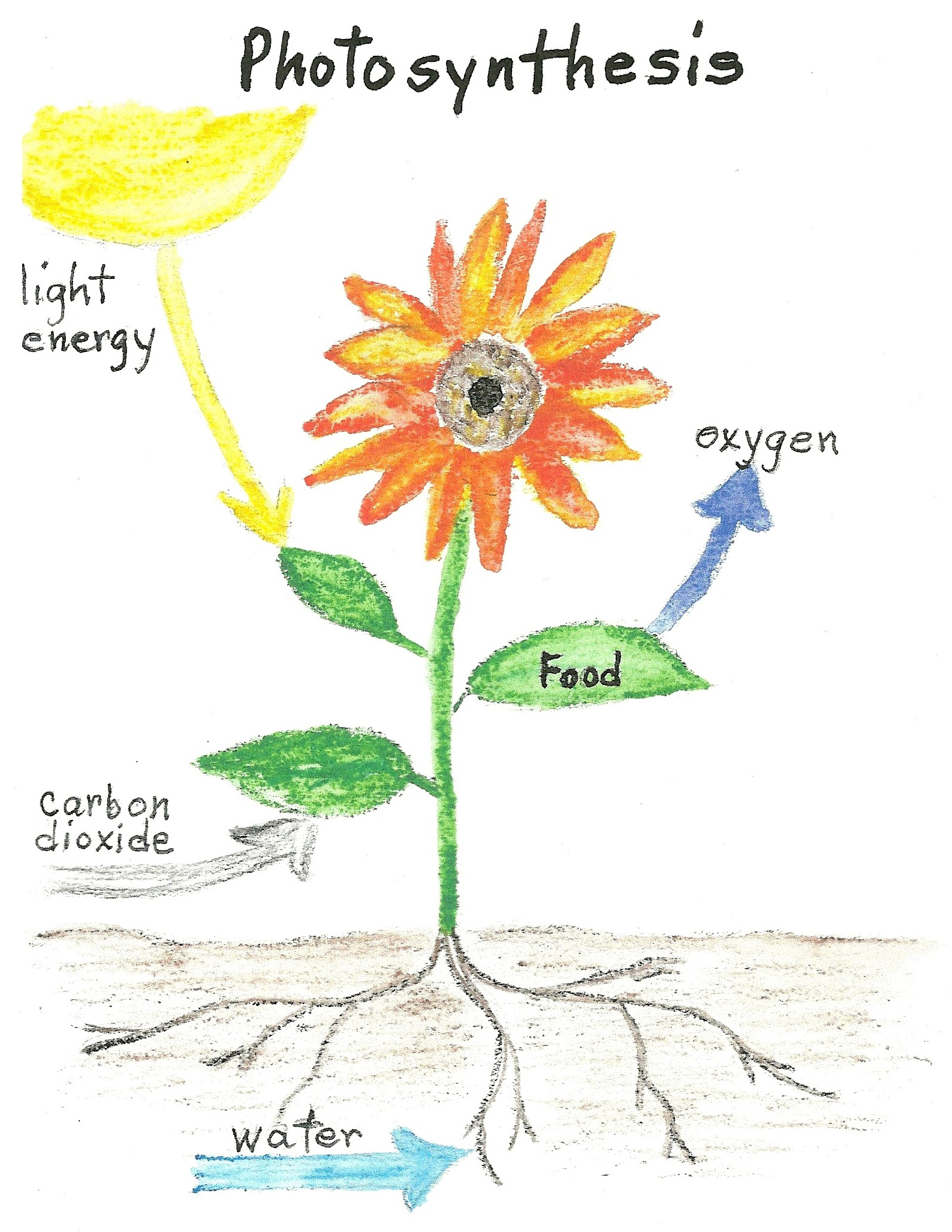 Plant Labeling Worksheet Kindergarten