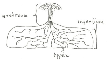 fungus diagram