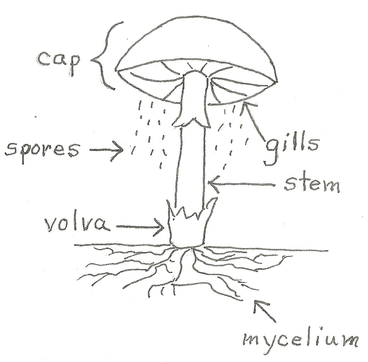 What Makes A Fungus A Fungus