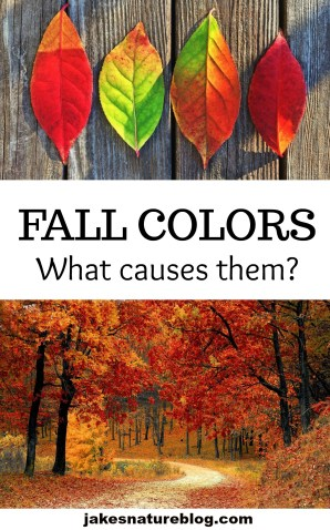 fall-colors-pin blog Fall fall colors jakes fun facts about nature Nature outdoors trees