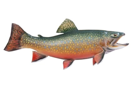 spawn, brook trout, fish