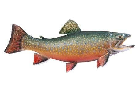 fish brook trout