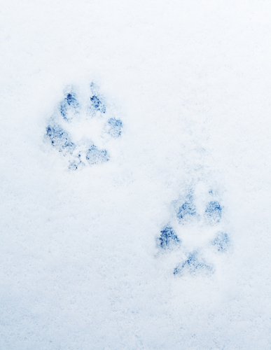 dog tracks snow