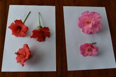 pressing flowers