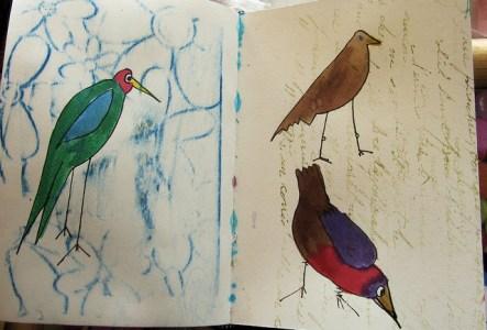 nature notebook, field book
