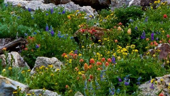 identify wildflowers
