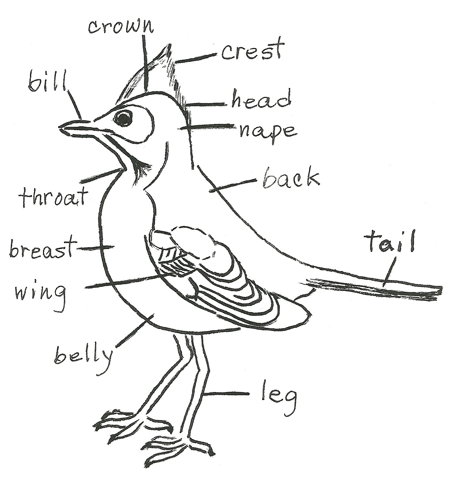 Wondrous Simple Diagram Of Bird Wiring Diagram Wiring Digital Resources Funapmognl
