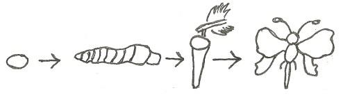 complete metamorphosis, diagram