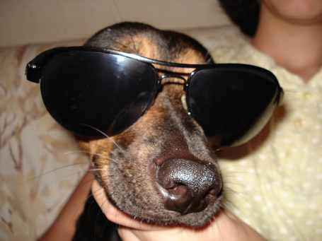 dog, natural sunglasses